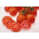 Tomato Farm Variety