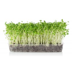 Organic Mustard Micro Green Seeds