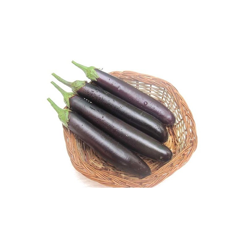 Brinjal - Purple Long