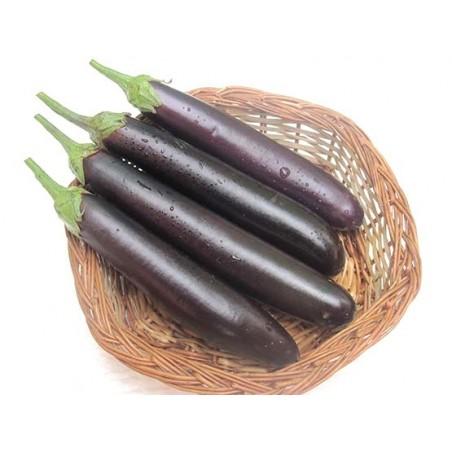 Brinjal - Purple Long