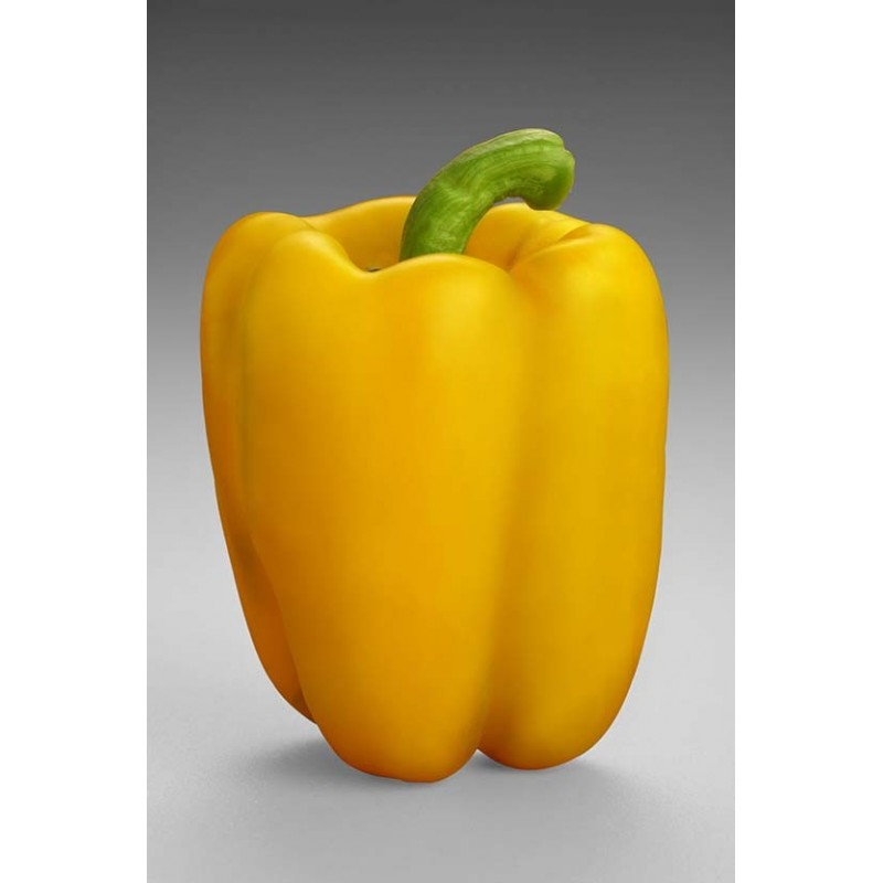 Capsicum - Yellow