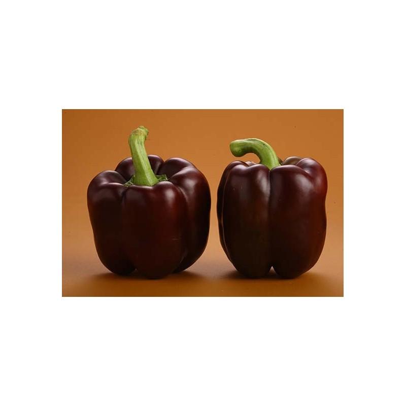 Capsicum - Purple